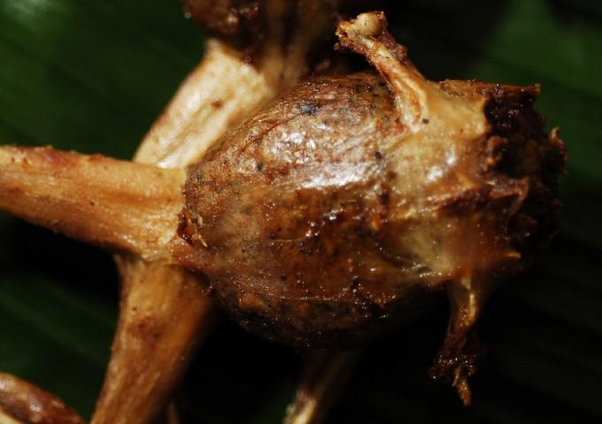 Tugak (frogs). Photo by Erik Liongoren