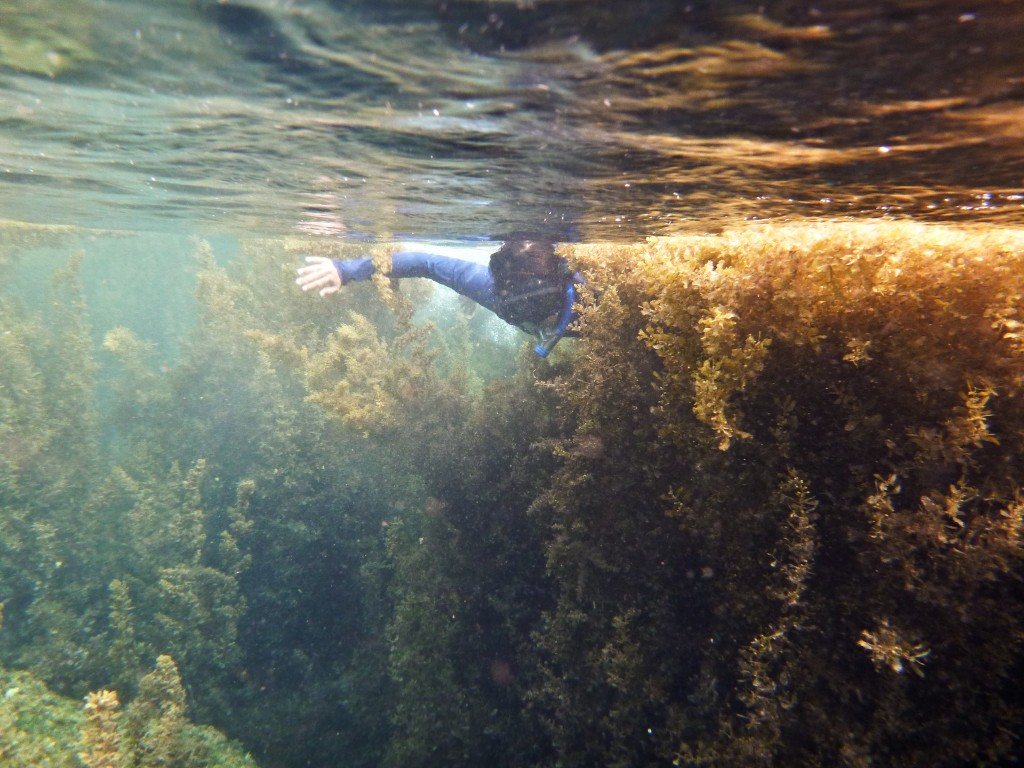 Exploring a forest of golden sea grass under Calayan's waters