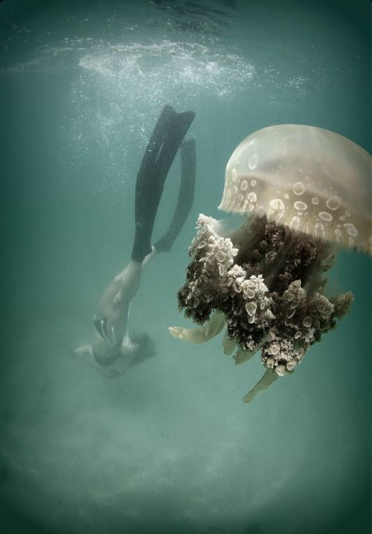 MJ Paula Jumuad freediving in Jellyfish Lake, Mindanao