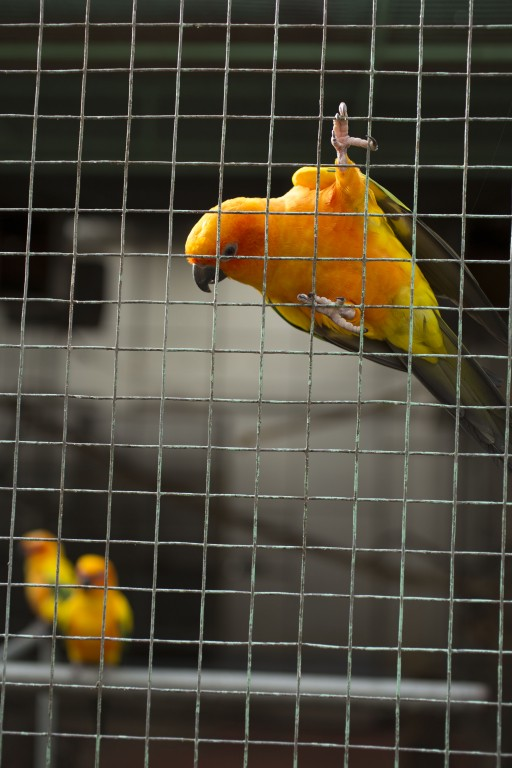 One of the bird species at Yoki's Farm's mini zoo section