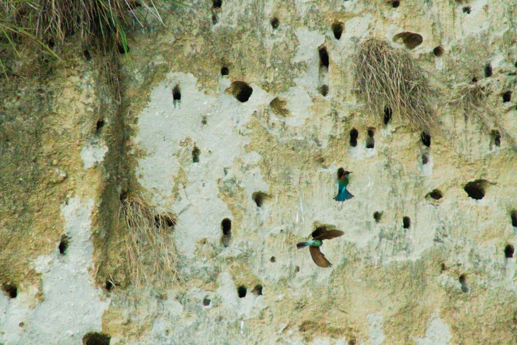 Bird's Wall