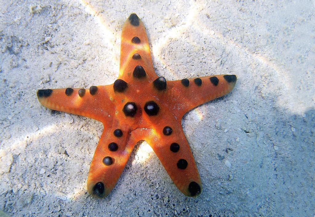 Marine life is abundant in Coron