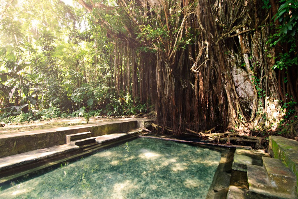 A century-old balete tree enveloping a spring pool