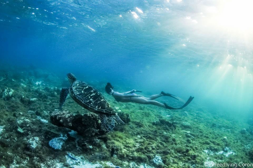 Freediving Photo by Catalin Craciun pinched from the Facebook page of Freedive Boracay