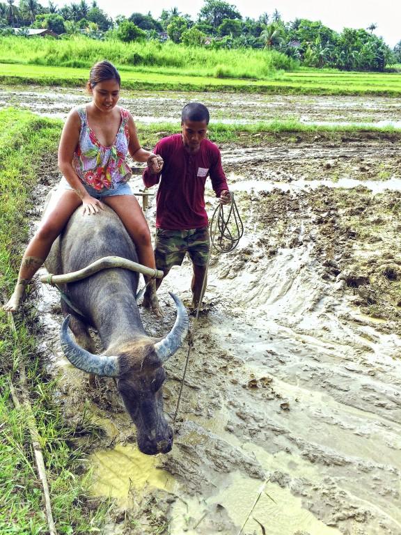 Ride Nanay, the resident carabao By Amanda Lago