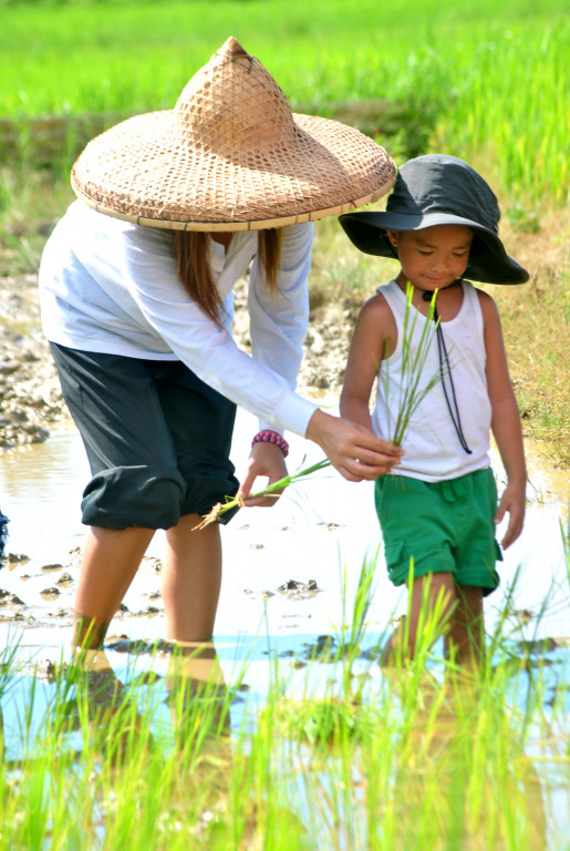 Try your hand at planting rice at the Motag Living Museum. Photo courtesy of the museum